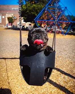 Top 5 Fun things to do with your dog this Spring