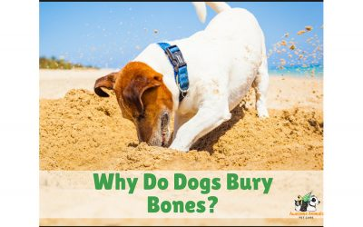 Why do dogs bury bones? - Awesome Animals