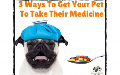 3 Ways To Get Your Pet To Take Their Medicine