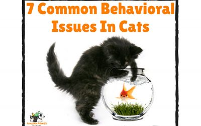 7 Common Behavioral Issues In Cats