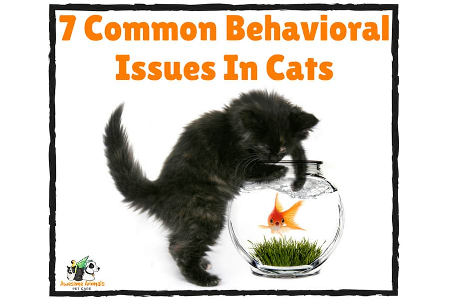 7 Common Behavioural Issues In Cats