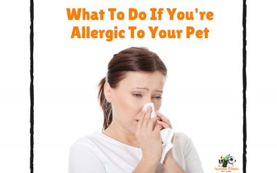 What To Do If You're Allergic To Your Pet