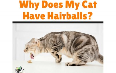 Why Does My Cat Have Hairballs?