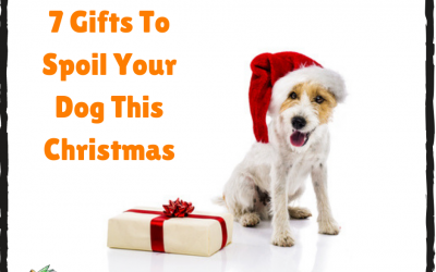 7 Gifts To Spoil Your Dog This Christmas