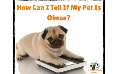 How Can I Tell If My Pet Is Obese?