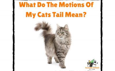 What Do The Motions Of My Cat's Tail Mean?