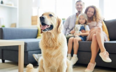 How much do pet sitters cost in Newcastle, Lake Macquarie?