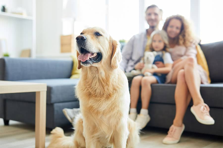How much do Pet Sitters cost in Newcastle & Lake Macquarie?