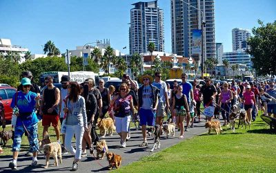 How to help your dog cope in crowds